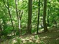 Willowbank ravine.JPG