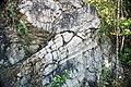 Winooski Dolomite (Middle Cambrian; Chimney Corner, Vermont, USA) 13.jpg