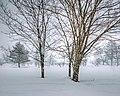 Winter Serenity.jpg