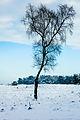Winter op de Roosendaalse heide.jpg