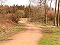 Worcester walk, Forest of Dean - geograph.org.uk - 149032.jpg