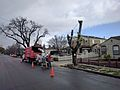 Workers cutting down a tree in Campbell.gk.jpg
