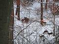 Wuppertal Nordpark 0011.jpg