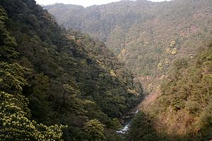 Wuyi Mountains - Forest in the nature reserve portion of the Wuyi Mountains.