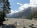 Yaks grazing on Kaligandaki river bank.jpg