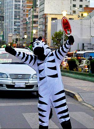 Zebra La Paz