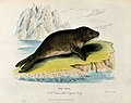 Zoological Society of London; a seal. Coloured etching by W. Wellcome V0023144.jpg
