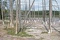 """Bobby socks trees"" at Fountain Paint Pots (4b18bc86-3e16-4114-b8bb-f8611640bd89).jpg"