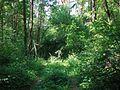 Ķekavas pagasts, Latvia - panoramio.jpg