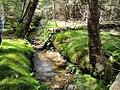Šumavský prales.jpg