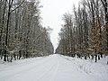 Автошлях С200320 «Берем'яни — Дуліби» - Відтинок Жнибороди — Дуліби, в лісі Язловецького лісництва - 12010671.jpg