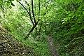 Бармаківські джунглі 04.jpg