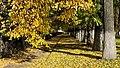 Бульвар Казанский, в осеннем золоте листвы.jpg