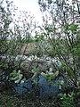 Весна на берегу Лаптевского пруда - panoramio.jpg