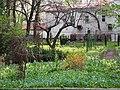 Ковёр из первоцветов в Саду Травникова.jpg