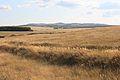 Козьи горы - panoramio (3).jpg