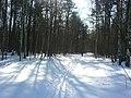 Лыжная колея - panoramio.jpg