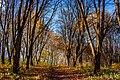 Осінь. Дендропарк. ліс біля парку.jpg