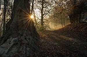 Парк-пам'ятка садово-паркового мистецтва Молодіжний - казкове світло.jpg