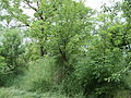 Парк шума Гази Баба во мај (151).JPG