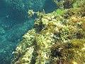 Подводное фото. Симеиз. Крым. Сентябрь 2012 - panoramio (1).jpg