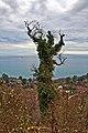 Сказочное дерево на Иверской горе - panoramio.jpg
