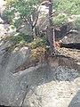 Скельно-печерний комплекс - скелі Довбуша (6).jpg