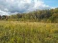 Широколиственный лес Подольского лесничества 02.jpg
