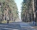 Юрмала (Латвия) Дорога - panoramio.jpg