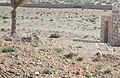 الأغواط - panoramio.jpg