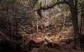 ป่าภูกระดึง.jpg