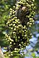 สวนสมเด็จพระนางเจ้าสิริกิติ์ (Queen Sirikit Park) IMG 7139.jpg