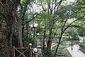ქუთაისის ბოტანიკური ბაღი 01.jpg