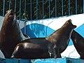 オホーツク水族館 (北海道網走市二ツ岩海岸)12 トド.jpg
