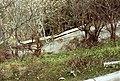 吉野犬 - panoramio.jpg