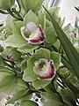 大花蕙蘭-親王 Cymbidium Shinnou -香港沙田洋蘭展 Shatin Orchid Show, Hong Kong- (9255176246).jpg