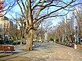 大通公園西6丁目 (Nishi 6-chome, Odori Park) - panoramio.jpg