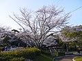 水源公園 - panoramio - gundam2345 (5).jpg