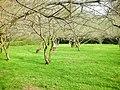 清華大學 梅園 Dr.Mei Memorial Garden - panoramio.jpg
