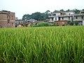 田园村庄 - panoramio.jpg