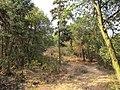 雨母山 - panoramio (14).jpg
