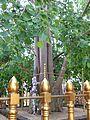 009 Bodhi Tree (20435873822).jpg