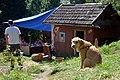 02017 1277 Treffen der Alternative Gemeinschaften, Jablonka, Ost-Beskiden.jpg
