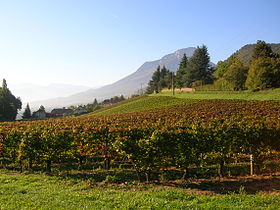 Image illustrative de l'article Vignoble de Savoie