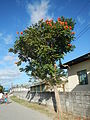 09654jfRiverside Farm Schools Roads Tacasan Telacsan Village Macabebe Pampangafvf 17.JPG
