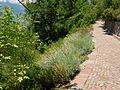 2008 07 Botanical Garden Meran 70600R0198.jpg
