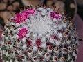 2010. Выставка цветов в Донецке на день города 48.jpg