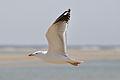 2012-01-11 13-06-32 Spain Canarias Jandía.jpg