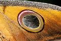 2012-07-20 15-23-04-Lepidoptera sp..jpg