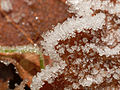 2013-12-16 12-41-27 gelee-blanche.jpg